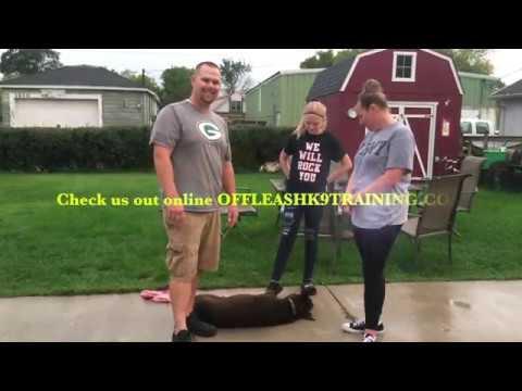 Best dog Training Milwaukee Doberman dog training mixed breed training  best dog training Wisconsin