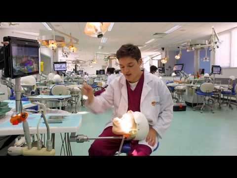 15 Questions With Andrew Somerville - Bachelor Of Oral Health Student