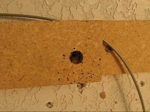 How To Find Bed Bugs In Hotels Youtube