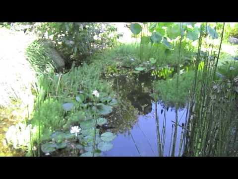 Filtro per laghetto orlandi delio doovi for Alghe laghetto artificiale
