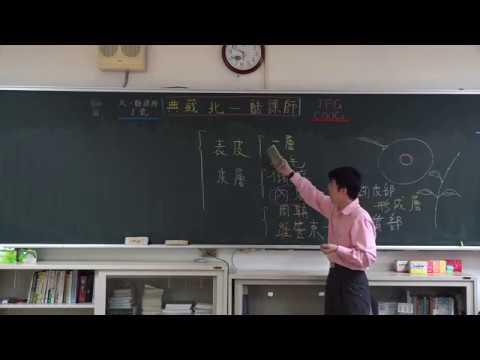 【潘彥宏老師】基礎生物(上) 12 | 第二章植物的構造與功能  第一節植物的營養構造與功能