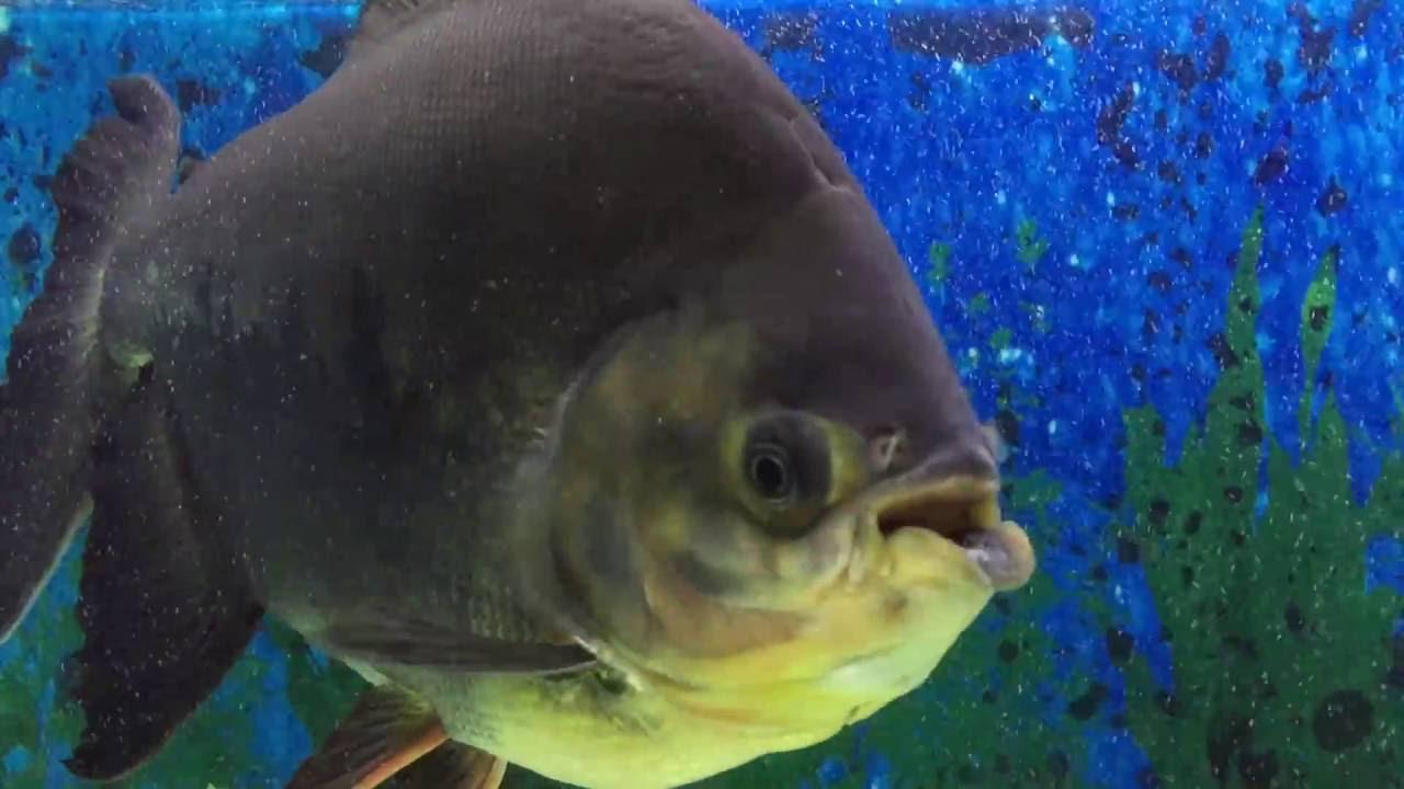 Fish in big aquarium - Big Aquarium Big Fish