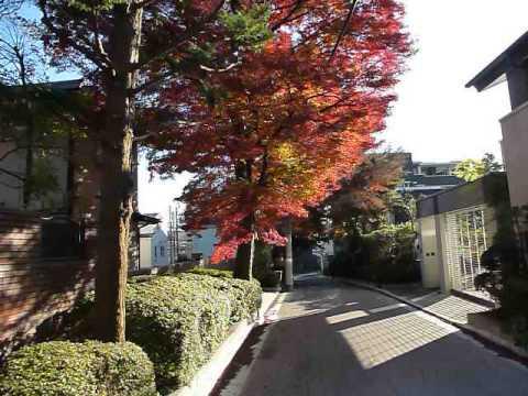 live in tokyo japan nerima-ku 紅葉 1050327