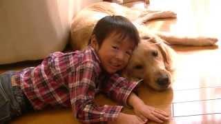 末っ子とゴールデンが戯れてます。 2歳ゴールデン男の子 & 5歳幼稚園児.