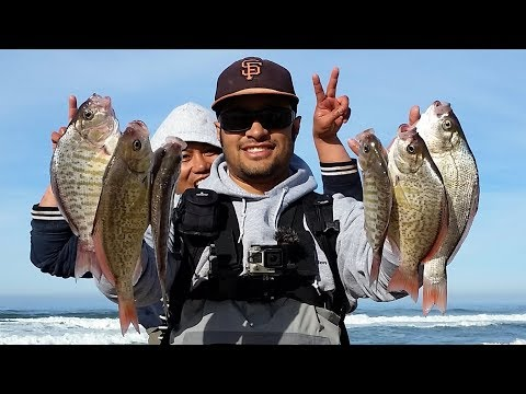 Lessons From The PERCH WHISPERER! Tips To Help You Bag More SURFPERCH