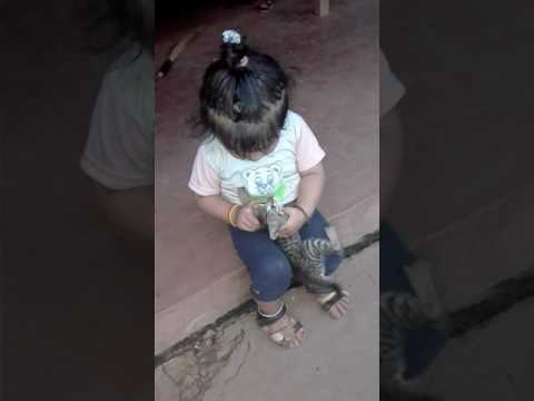 Girl playing with baby cat