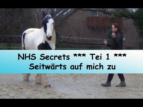 Bild: Pferdeausbildung - Natural Horsemanship Secrets