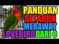 Panduan Merawat Lovebird Dari Nol Selama Setahun Part   Mp3 - Mp4 Download