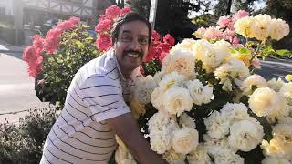 Vlog: 04 MAY 2020 - My Rose Garden...