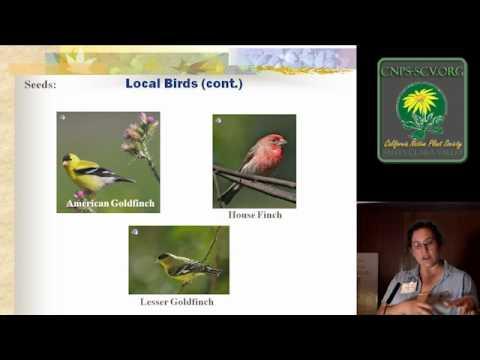 Songbird Gardening with Native Plants