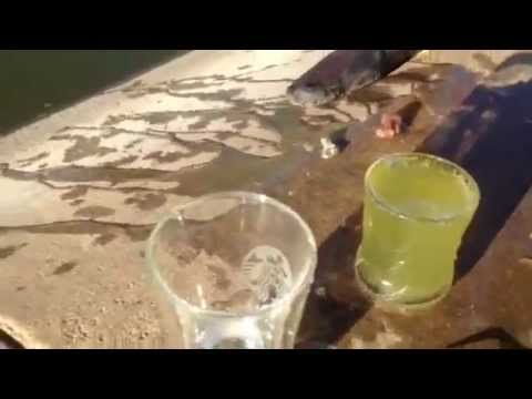 puritii filter water bottle demonstration with pond water | Free Safe Water