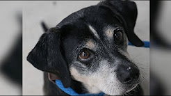 Animal Care & Protective Services Adoption Appeal