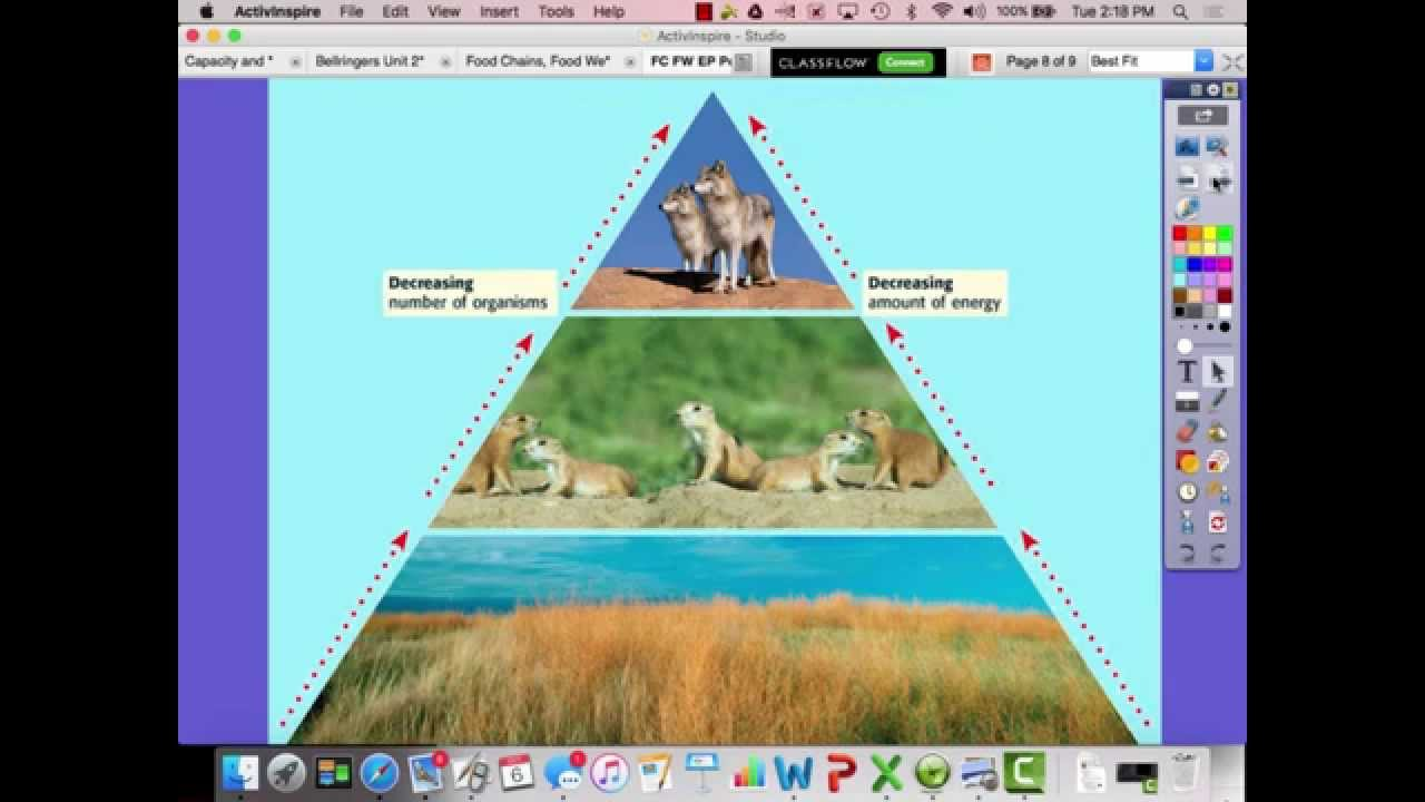 Food Chains Food Webs And Energy Pyramids Youtube