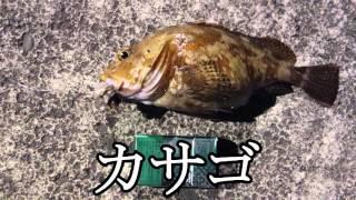 「釣った根魚でアクアパッツァ食べるぞ」 in 八丈島