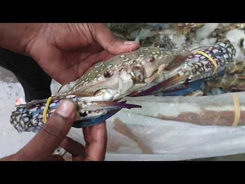 Gazipur Fish Market In Delhi   Largest Fish Market In Asia | DelhiNCR | Wholesale Fish Markets
