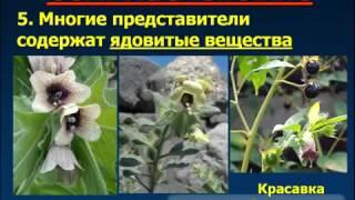 Учебный фильм  Тема 9 Царство Растения  Высшие и нисшие растения