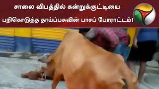 சாலை விபத்தில் கன்றுக்குட்டியை பறிகொடுத்த தாய்ப்பசுவின் பாசப் போராட்டம்! | Thiruvallur | Cow