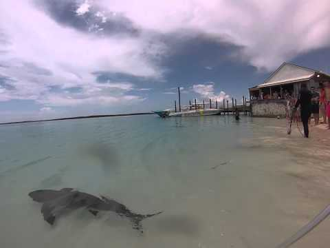 more swimming with sharks at ship channel cay, exuma
