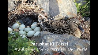 Parashat Ki Tetzei: Awakening Divine Mercy in Our World