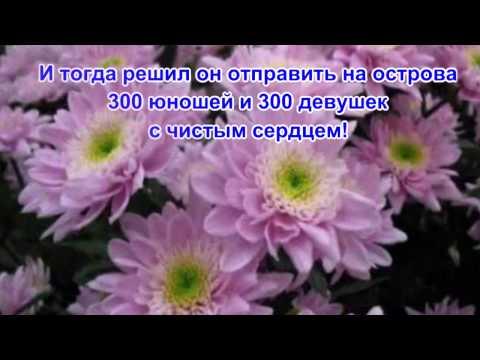 Легенды о цветах  Хризантема