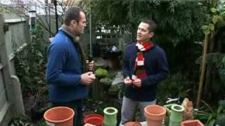 Learn how to plant spring bulbs with Martyn Cox