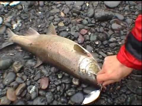 Спортивная рыбалка на реке Опала