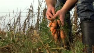 Prosto od rolnika - MODR Karniowice - film o sprzedaży artykułów rolnych