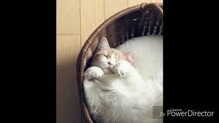 ЗвукИ котов