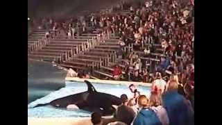 Baby Shamu , Minor Incident , San Diego Sea World