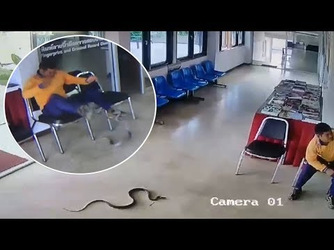 Jason King - Snake Slithers Into Police Station And Jumps At Man