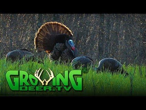 His Best Turkey Hunt In 32 Years | Better Food Plots (#441) @GrowingDeer.tv
