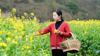 How to use rape flowers and make Chinese food |野小妹 wild girl