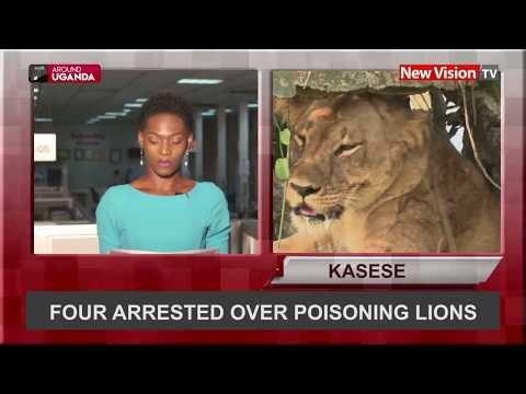 Around Uganda: Four arrested over poisoning lions