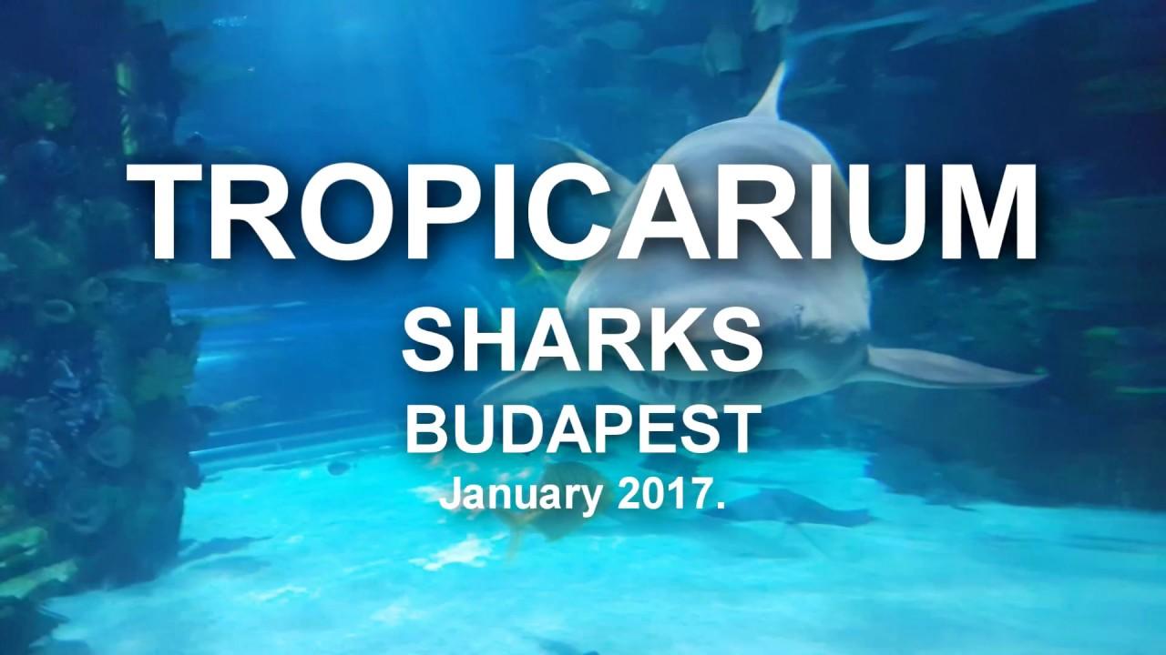A halraj es a capak 238 - Tropicarium Sharks Budapest January 2017