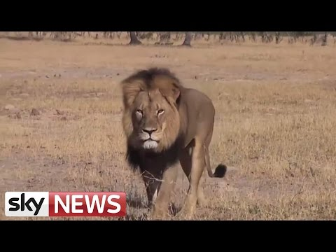Zimbabwe Suspends Hunting Of Lions, Leopards and Elephants