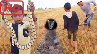 Удивительные Дети Поймают Самую Большую Змею Рукой В рисовом Поле - Как Поймать Большую Змею В Ка