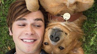 12 лучших фильмов про собак