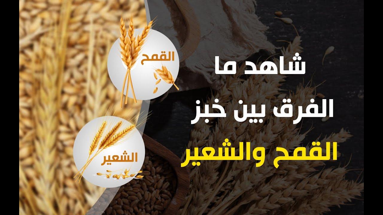 قالوا فقلنا أيهما أكثر فائدة القمح ام الشعير Youtube