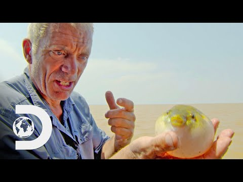 Jeremy Wade Catches Deadly Piranha-Like Puffer Fish | River Monsters