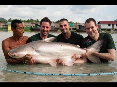 Fishing Thailand Including 100 Lbs+ Beasts ( TopCats Fishing Holiday Resort, Koh Samui )