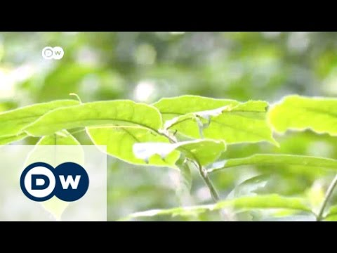 Green lungs for West-African city | Africa on the move