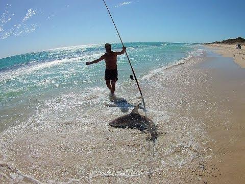 Perth Area Beach Fishing & Ballooning - Spinner Shark, Snapper & Wobbegong