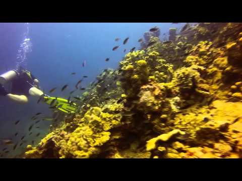 Diving Koh Tao, Sep. 2014