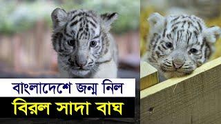 চট্টগ্রাম চিড়িয়াখানায় বিরল সাদাবাঘ শাবকের জন্ম | White Tiger in Chittagong Zoo | News Valley