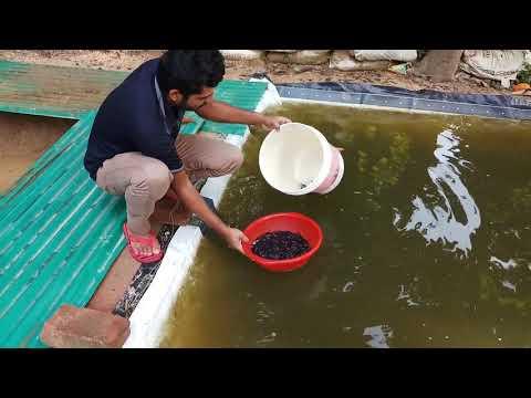 Mini Catfish Fish Pond | Low-Cost  Fish Pond Design Farm