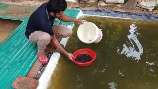 Mini Catfish Fish Pond Low Cost Fish Pond Design Farm Youtube