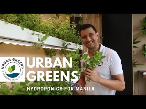 Urban Greens - Hydroponic Farming in Manila