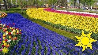 Парк Веселка в день открытия! Мариуполь с высоты. Аэросъемка. Ніна Матвіенко - Квітка душа ☀SunVideo