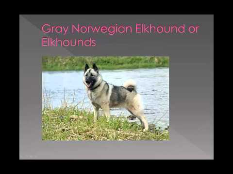 Dog breed name cross reference part 5-G,H