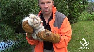 Опадные ловчие сети, Или, как я ловил кролика .